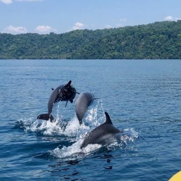A Dolphin and Snorkeling Tour in Costa Rica – with Kids!