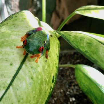 Seeing Wildlife in Costa Rica: A Visit to Neo Fauna