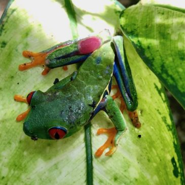 The Monster Guide to the Animals of Costa Rica