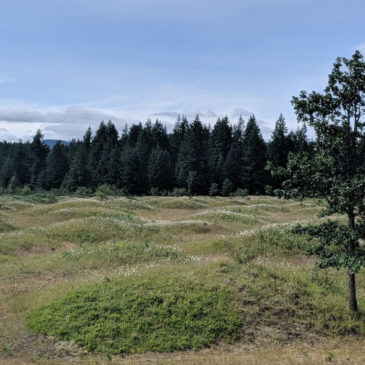 Visiting the Mima Mounds in Olympia, Washington