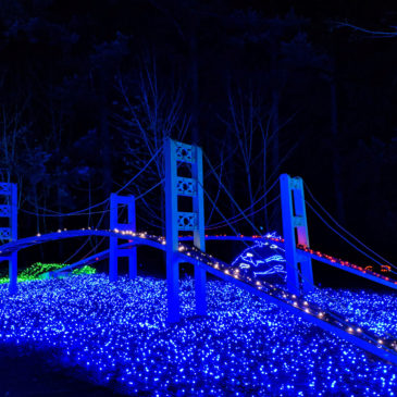 What to Expect at Point Defiance & Aquarium's Zoolights in Tacoma