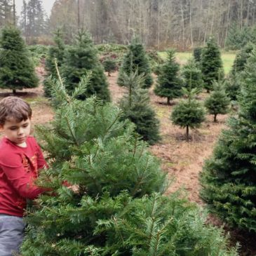 The Best Christmas Tree Farms around the South Sound