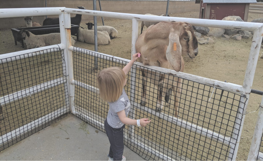 Petting Zoo Thanksgiving Point